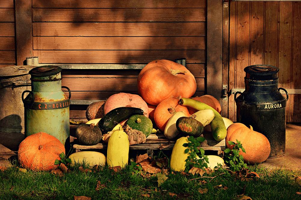 12 seizoensgroentes voor iedere maand